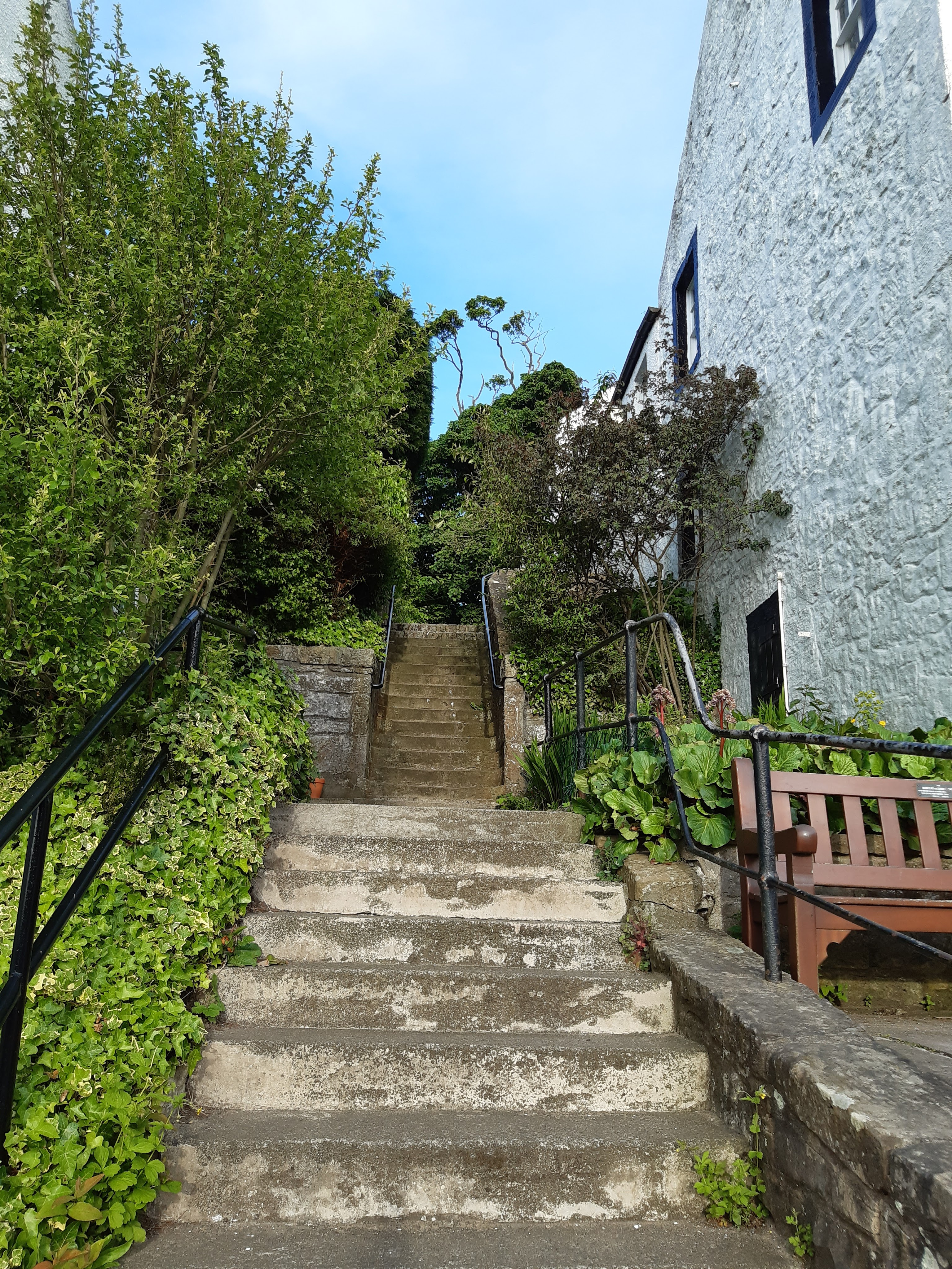 Cramond. Outside under blue sky. Looking up a narrow set of stone steps with a landing halfway to the right white painted house front with a wooden bench belowthis. cast iron banisters to the left and the right of the steps all decorated with green plants, and shrubs